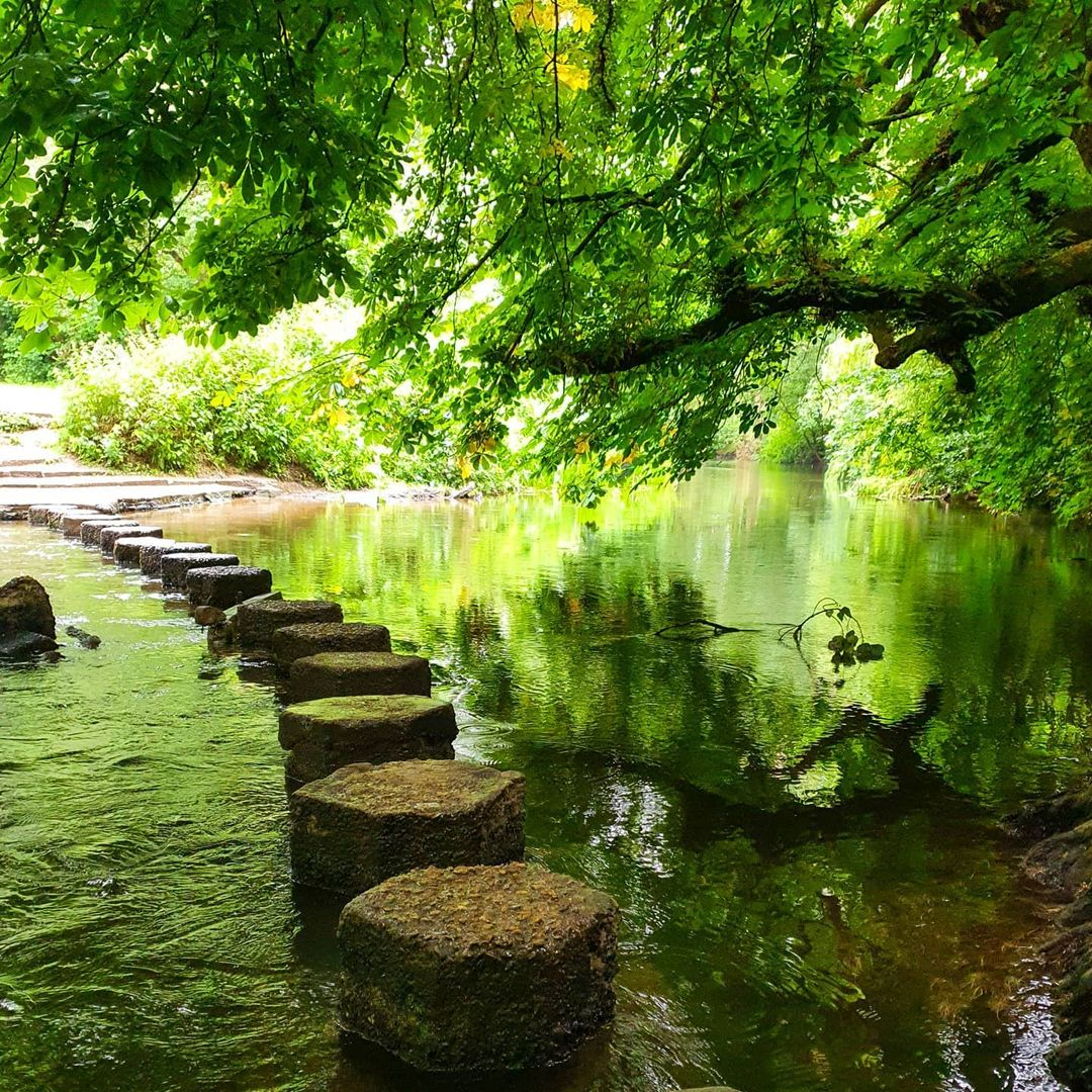 Box Hill Stepping Stones Walk - Best Surrey Walks: Discover the great outdoors in your backyard