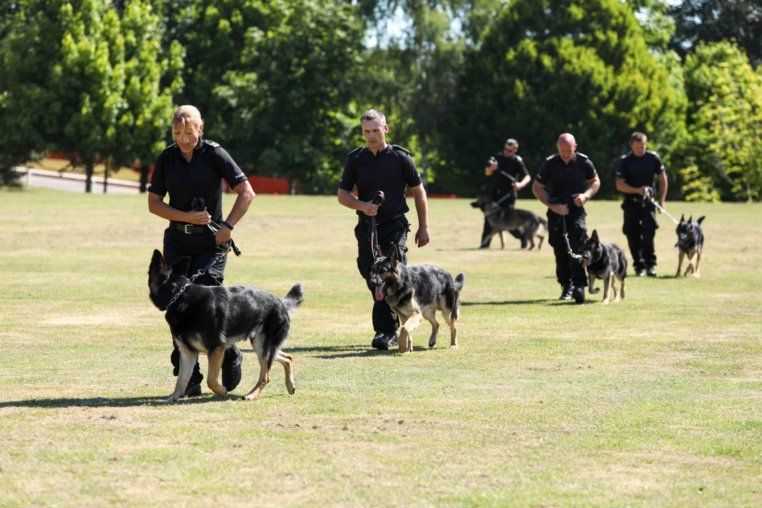 Surrey Police Dog Training School dogs walking