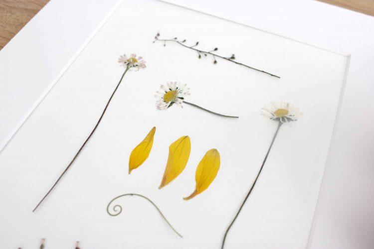 Flower Press Studios Pressed flower artDaisy and sunfl