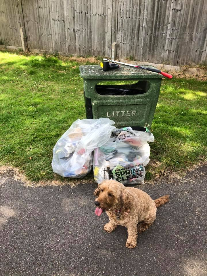 Litter and dog