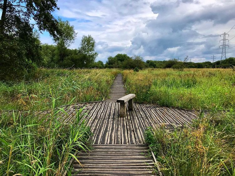 Riverside Nature Reserve - Best Surrey Walks: Discover the great outdoors in your backyard
