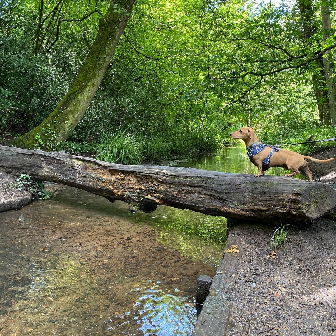 Chilworth Trail - Best Surrey Walks: Discover the great outdoors in your backyard