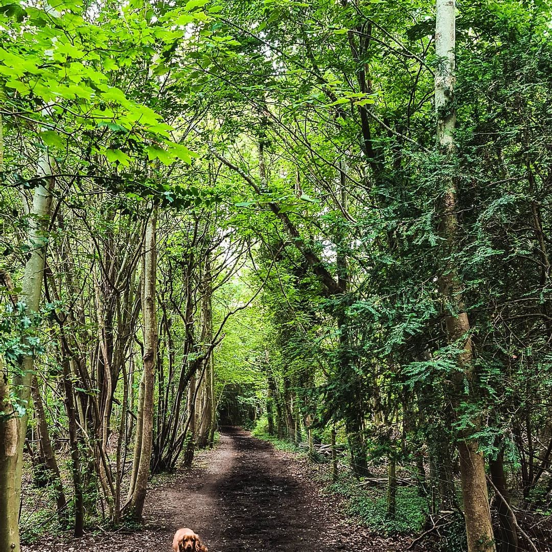 The Polesden Lacey Walk - Best Surrey Walks: Discover the great outdoors in your backyard